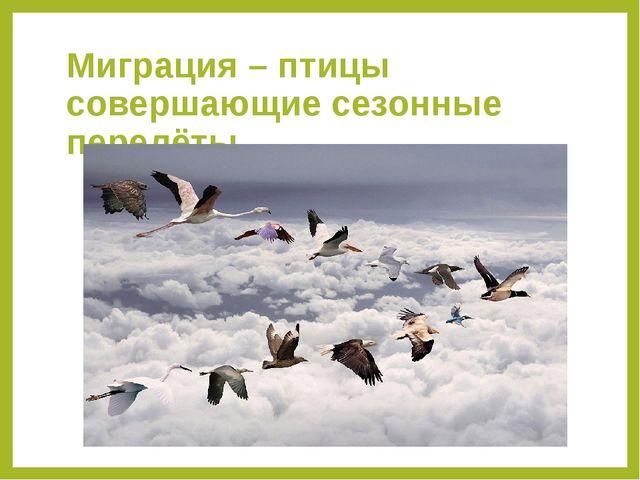 Миграция – птицы совершающие сезонные перелёты.