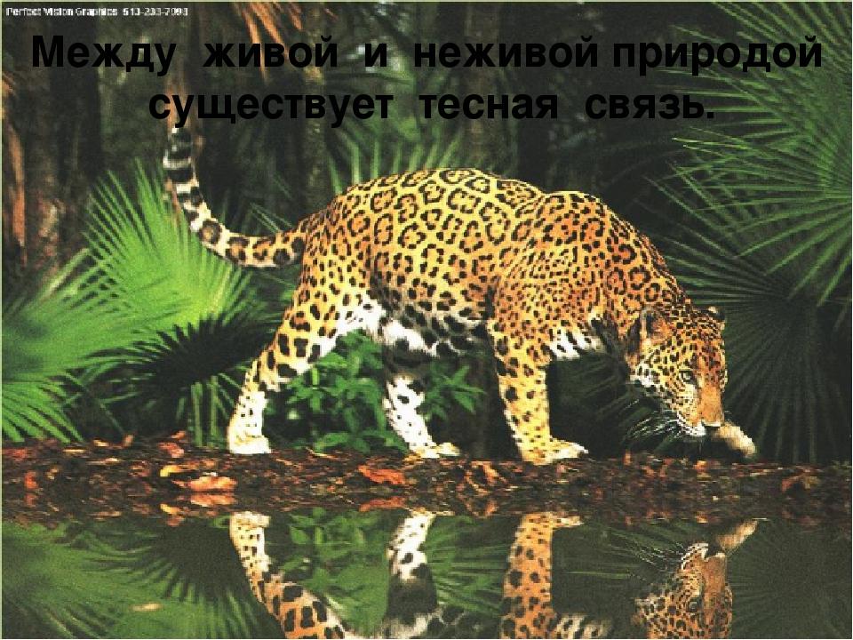 Между живой и неживой природой существует тесная связь.