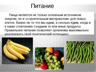 Питание Пища является не только основным источником энергии, но и «строительн