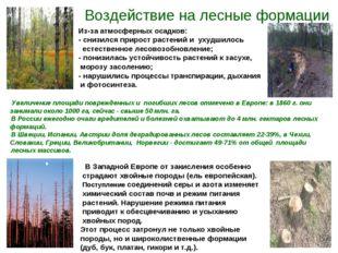 Воздействие на лесные формации Из-за атмосферных осадков: - снизился прирост