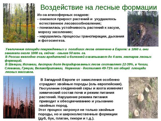 Воздействие на лесные формации Из-за атмосферных осадков: - снизился прирост...