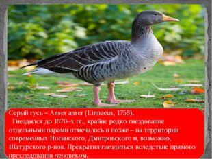 «Статус 1»- составляют животные и растения, которые находятся под угрозой исч