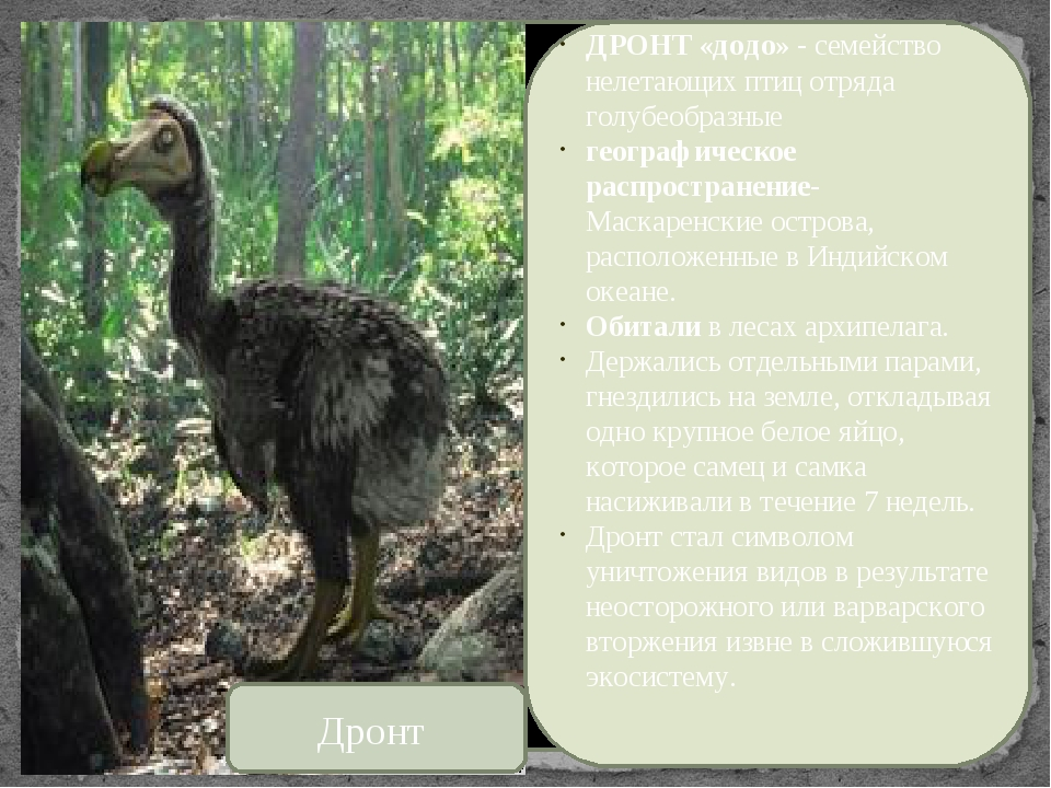 «Черный список»- «статус 0»-это список тех видов, которые вымерли, начиная с...