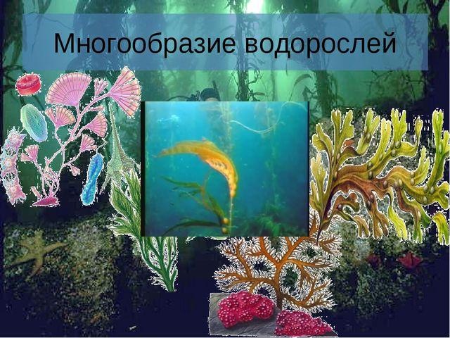 * Многообразие водорослей