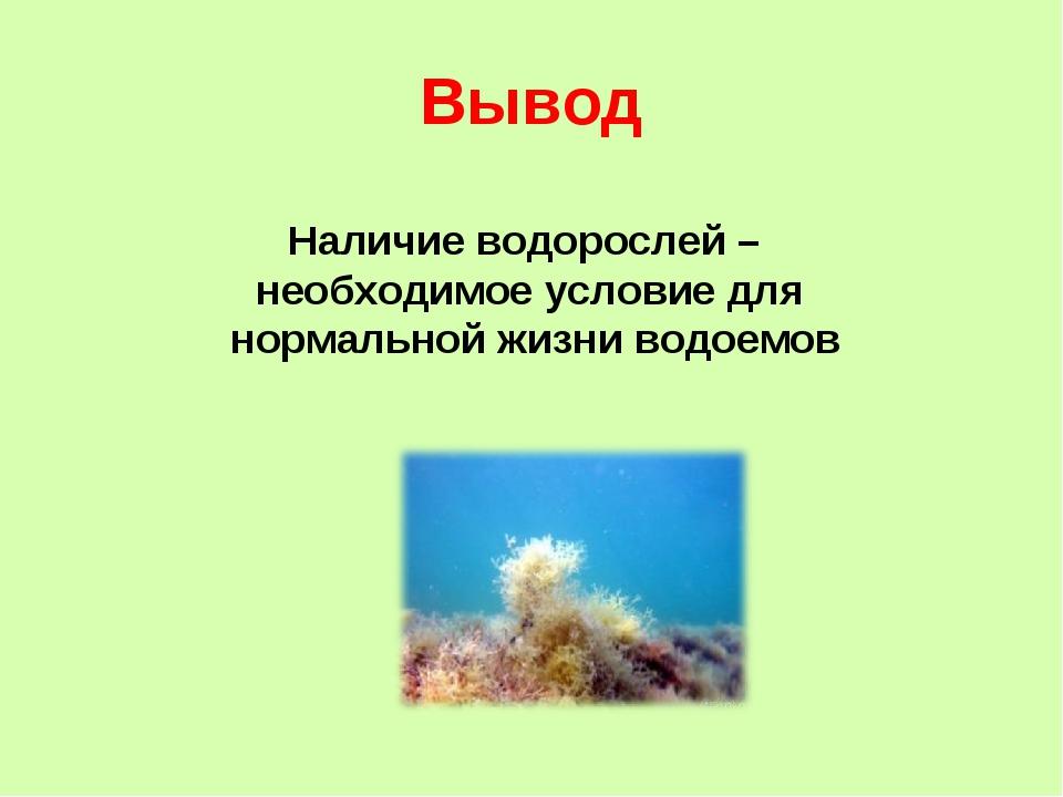 Вывод Наличие водорослей – необходимое условие для нормальной жизни водоемов