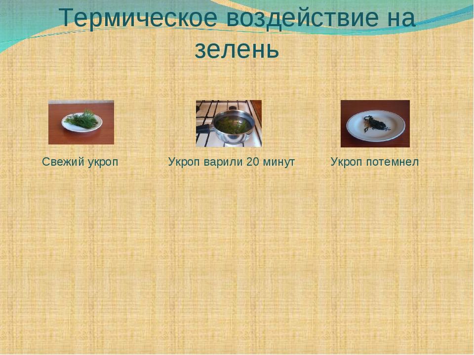 Термическое воздействие на зелень Свежий укроп Укроп варили 20 минут Укроп по...