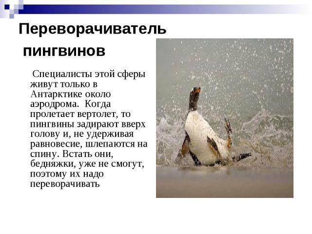 Переворачиватель пингвинов Специалисты этой сферы живут только в Антарктике...