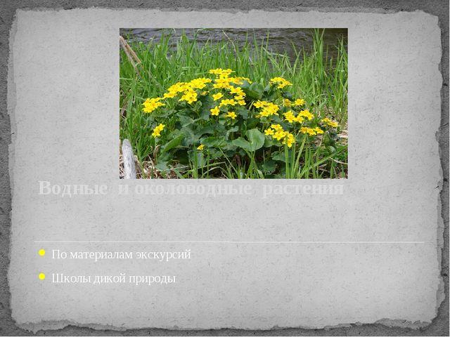 Водные и околоводные растения По материалам экскурсий Школы дикой природы