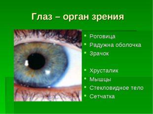 Глаз – орган зрения Роговица Радужна оболочка Зрачок Хрусталик Мышцы Стеклови