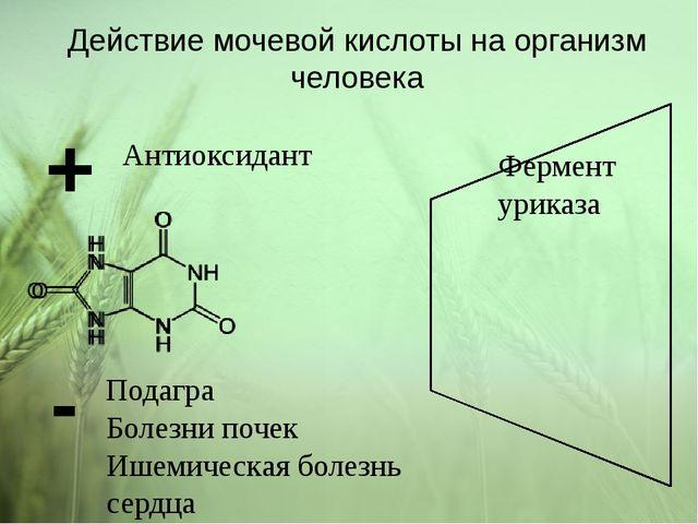 Действие мочевой кислоты на организм человека + Антиоксидант - Болезни почек...