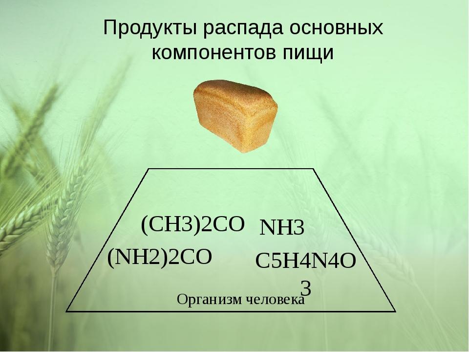 Продукты распада основных компонентов пищи C5H4N4O3 NH3 (NH2)2CO (CH3)2CO Орг...