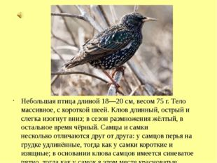 Небольшая птица длиной 18—20 см, весом 75г. Тело массивное, с короткой шеей.