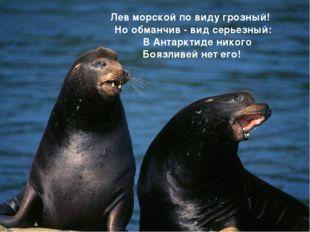 Лев морской по виду грозный! Но обманчив - вид серьезный: В Антарктиде ник