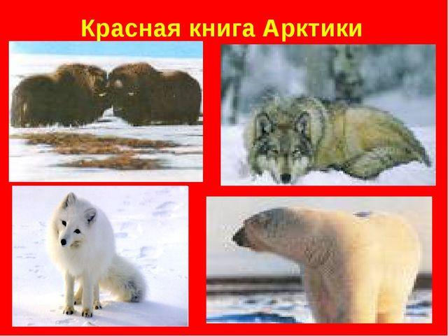 Красная книга Арктики