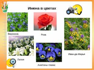 Имена в цветах Вероника Роза Лилия Анютины глазки Иван-да-Марья