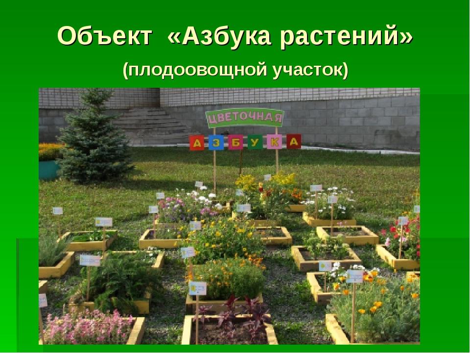 Объект «Азбука растений» (плодоовощной участок)