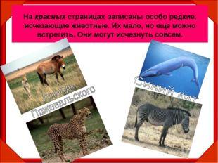 На красных страницах записаны особо редкие, исчезающие животные. Их мало, но