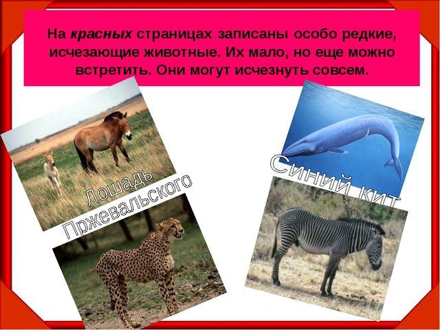 На красных страницах записаны особо редкие, исчезающие животные. Их мало, но...