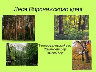 Леса Воронежского края Теллермановский лес Усманский бор Шипов лес