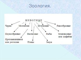Зоология.