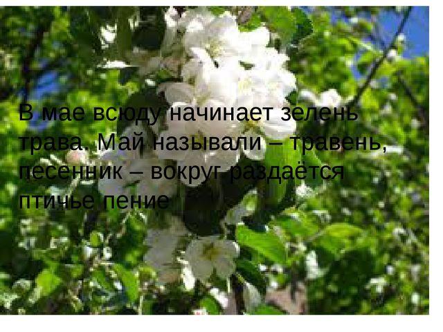 В мае всюду начинает зелень трава. Май называли – травень, песенник – вокруг...