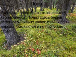 Почва Тайга-это однообразные по составу хвойные леса .Почвы здесь бедны перег