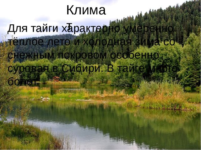 Климат Для тайги характерно умеренно тёплое лето и холодная зима со снежным п...