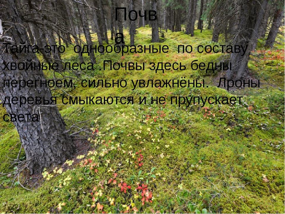 Почва Тайга-это однообразные по составу хвойные леса .Почвы здесь бедны перег...