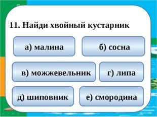 11. Найди хвойный кустарник  в) можжевельник б) сосна а) малина г) липа д)