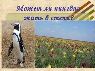 Может ли пингвин жить в степи?