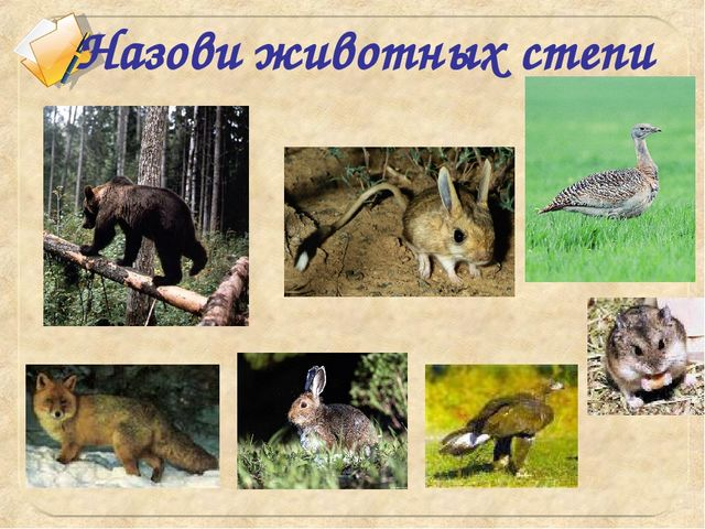 Назови животных степи