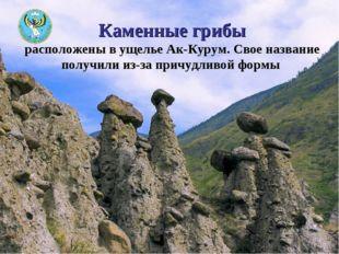 Каменные грибы расположены в ущелье Ак-Курум. Свое название получили из-за пр