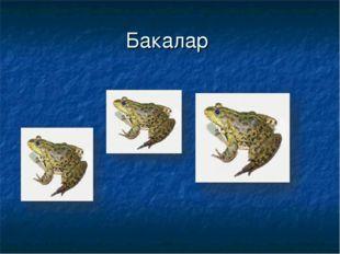 Бакалар
