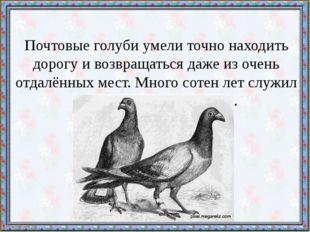 Почтовые голуби умели точно находить дорогу и возвращаться даже из очень отда