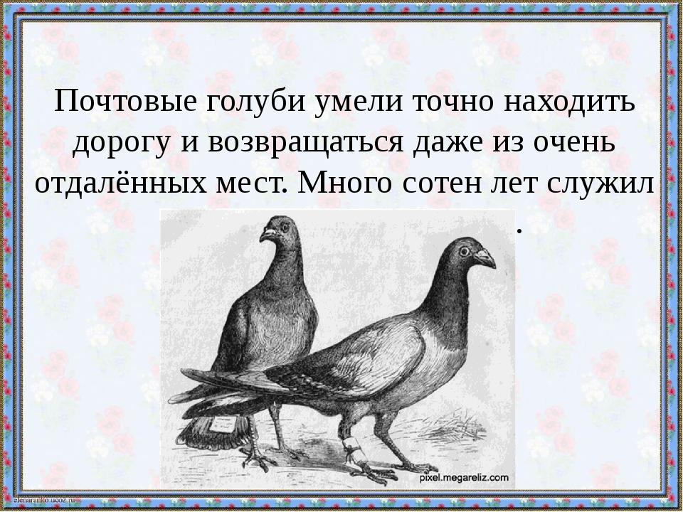 Почтовые голуби умели точно находить дорогу и возвращаться даже из очень отда...