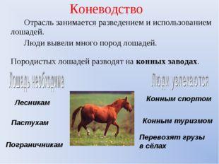Коневодство Отрасль занимается разведением и использованием лошадей. Люди выв