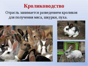Кролиководство Отрасль занимается разведением кроликов для получения мяса, шк