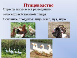 Птицеводство Отрасль занимается разведением сельскохозяйственной птицы. Основ