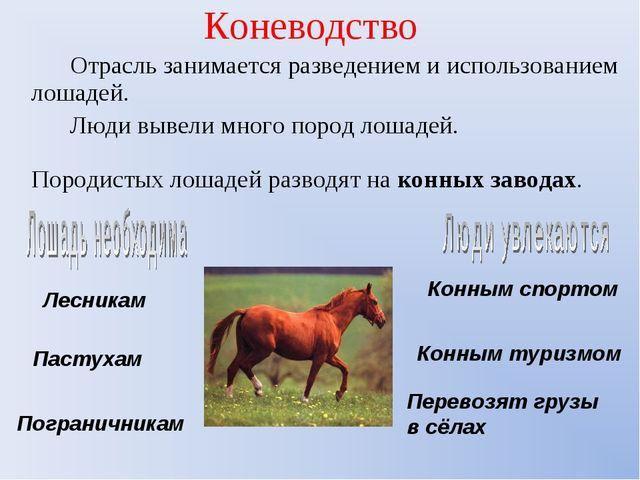 Коневодство Отрасль занимается разведением и использованием лошадей. Люди выв...