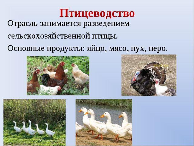 Птицеводство Отрасль занимается разведением сельскохозяйственной птицы. Основ...