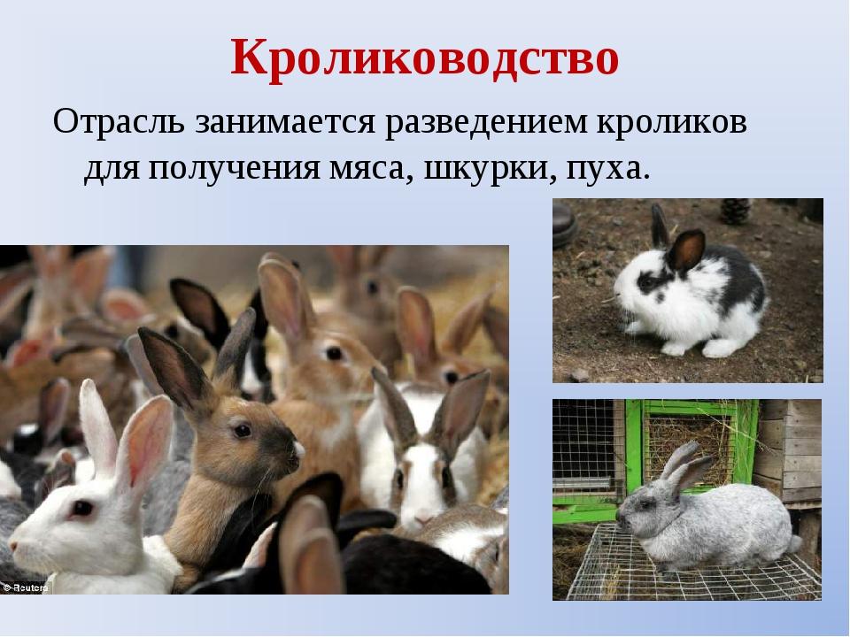 Кролиководство Отрасль занимается разведением кроликов для получения мяса, шк...
