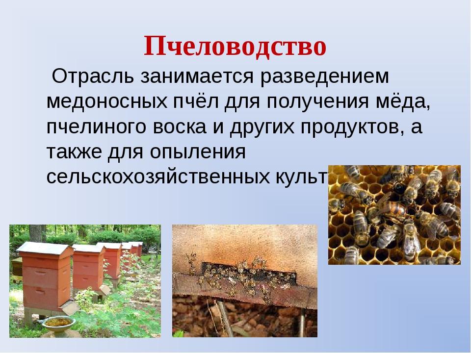Пчеловодство Отрасль занимается разведением медоносных пчёл для получения мёд...