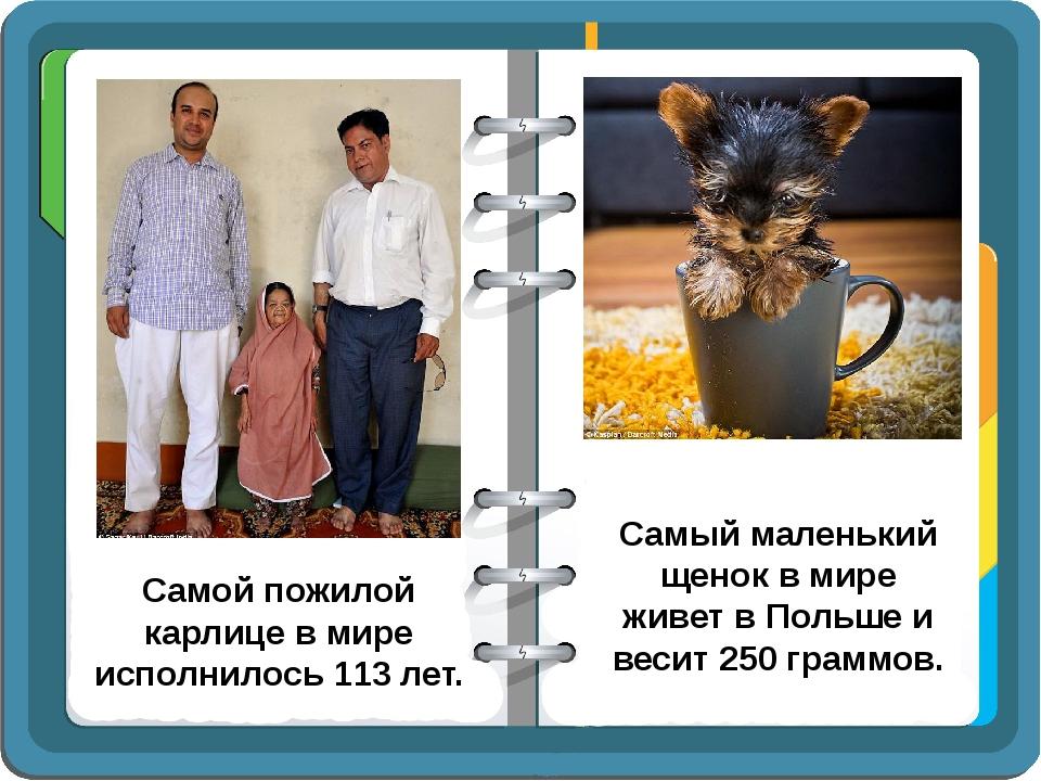 Самой пожилой карлице в мире исполнилось 113 лет. Самый маленький щенок в мир...