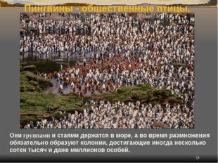 * Пингвины - общественные птицы. Они группами и стаями держатся в море, а во