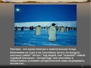 * Пингвин - это мужественная и замечательная птица. Неуклюжие на суше и не сп
