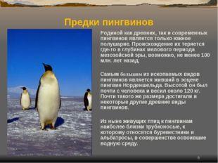 * Родиной как древних, так и современных пингвинов является только южное полу