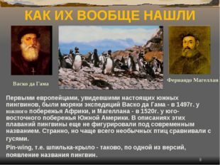 * КАК ИХ ВООБЩЕ НАШЛИ Первыми европейцами, увидевшими настоящих южных пингвин