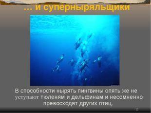 * … и суперныряльщики В способности нырять пингвины опять же не уступают тюле