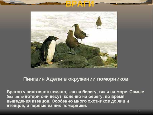 * ВРАГИ Пингвин Адели в окружении поморников. Врагов у пингвинов немало, как...