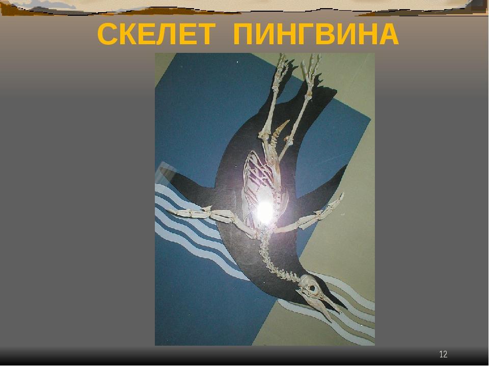 * СКЕЛЕТ ПИНГВИНА